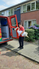 Agnes Aarts van de Dierenambulance Regio 's-Hertogenbosch met de zieke zwaan in Vught.