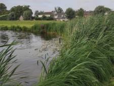 Te weinig zuurstof in water Kleine Schans: honderden vissen leggen het loodje