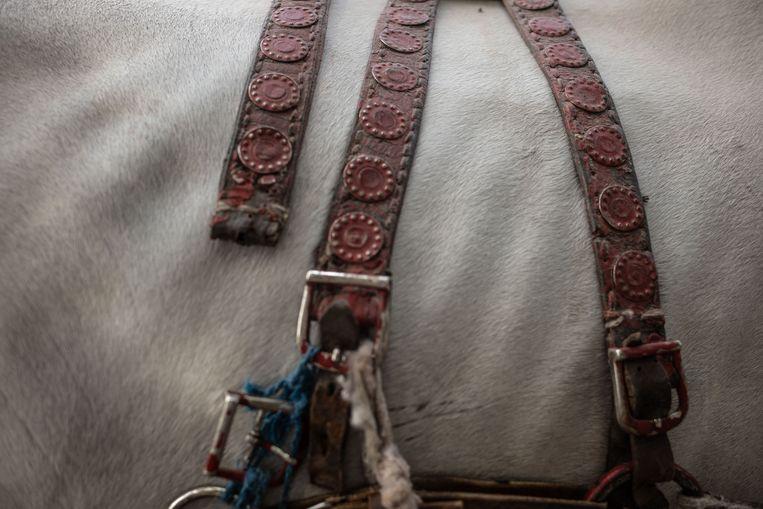 Een paard op het plein Jemaa el Fna. Beeld César Dezfuli