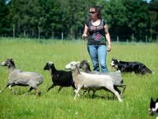 Susanne Lejuez uit Nijverdal met twee honden naar EK Schapendrijven