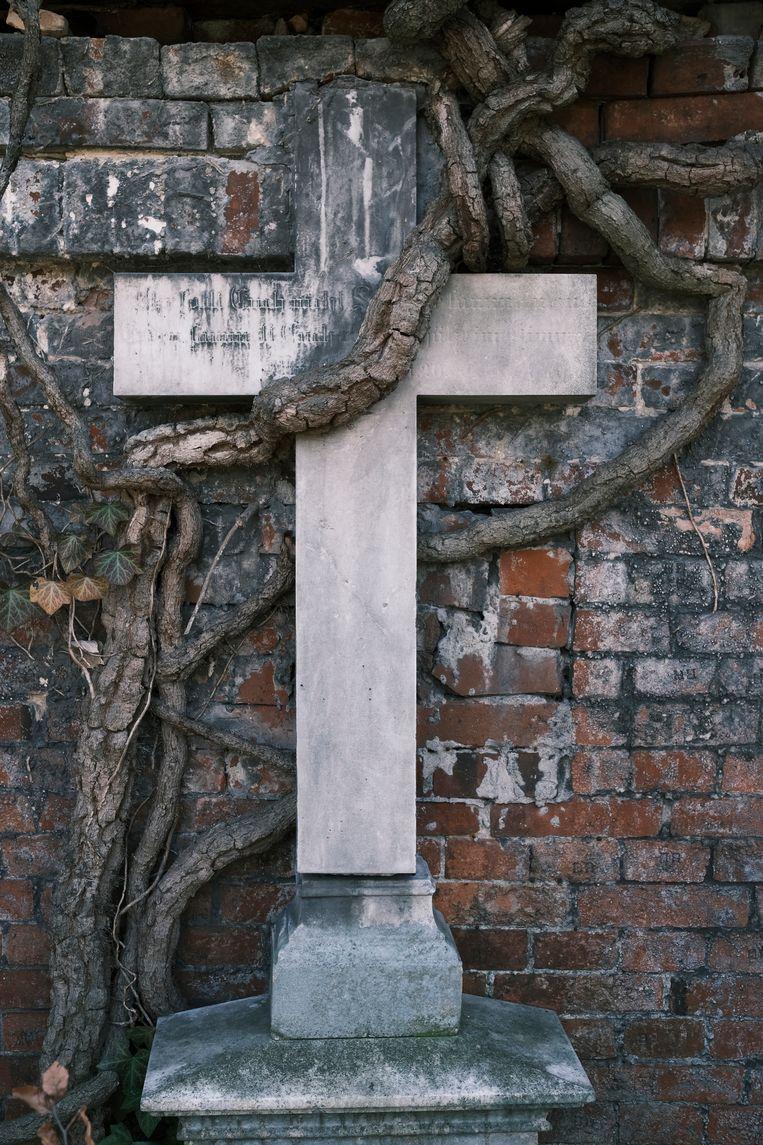 Door Nederlandse ogen is deze begraafplaats meer een bos met graven erin. Beeld Daniel Rosenthal