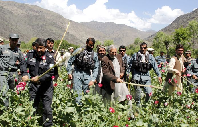 De Afghaanse autoriteiten vernietigden dit jaar tot dusverre slechts 0,1 procent van alle papaver.