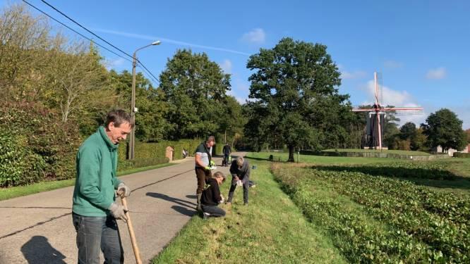 Bewoners van Molenwijk planten bloembollen in berm aan Beddermolen