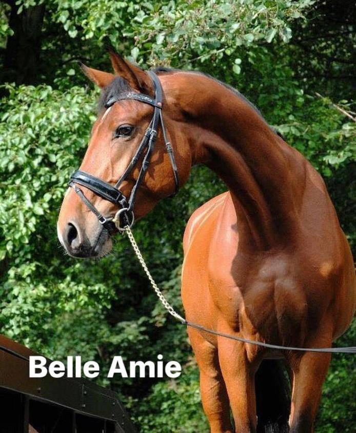 Belle Amie, een van de drie verdwenen paarden in Nuenen.