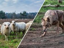 'Wolvenhek in Friesland is helemaal niet nodig'