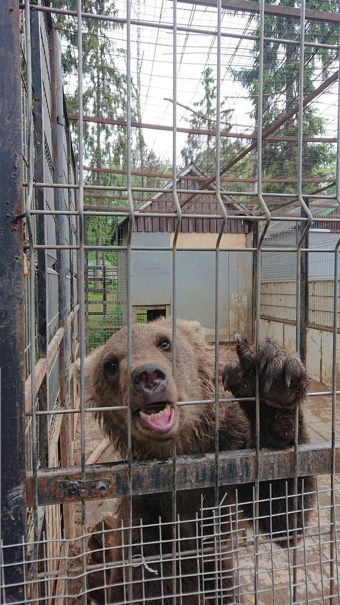 Byara werd in Rusland in beslag genomen en tijdelijk overgebracht naar een dierenasiel voor honden en katten (zie foto).