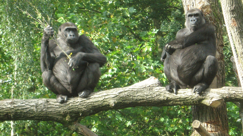 Drukte in de dierentuin Beeld VRT