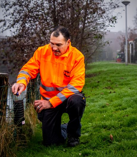 Rattenplaag in Moordrecht, gemeente neemt rigoureuze maatregelen