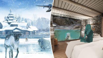 Slapen onder water met uitzicht op ijsberen: Pairi Daiza krijgt indrukwekkend nieuw verblijf (en je kan nu al boeken)