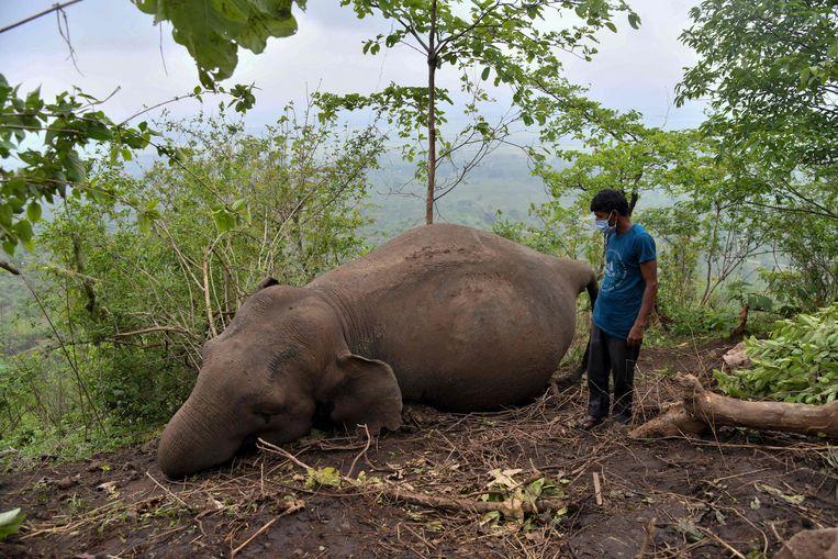 Een van de dode olifanten die door de bliksem zou zijn getroffen in Assam.  Beeld AFP