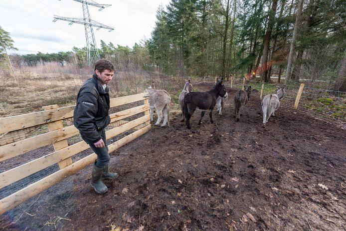 Anton Vos van Bosgroep Zuid Nederland laat ezels los voor ht heideherstelproject op De Sprankel in Veldhoven.