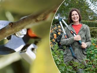 """Geen wildgroei in je tuin? Haal nu al je snoeischaar boven: """"Planten nemen door de klimaatopwarming veel kortere winterrust"""""""