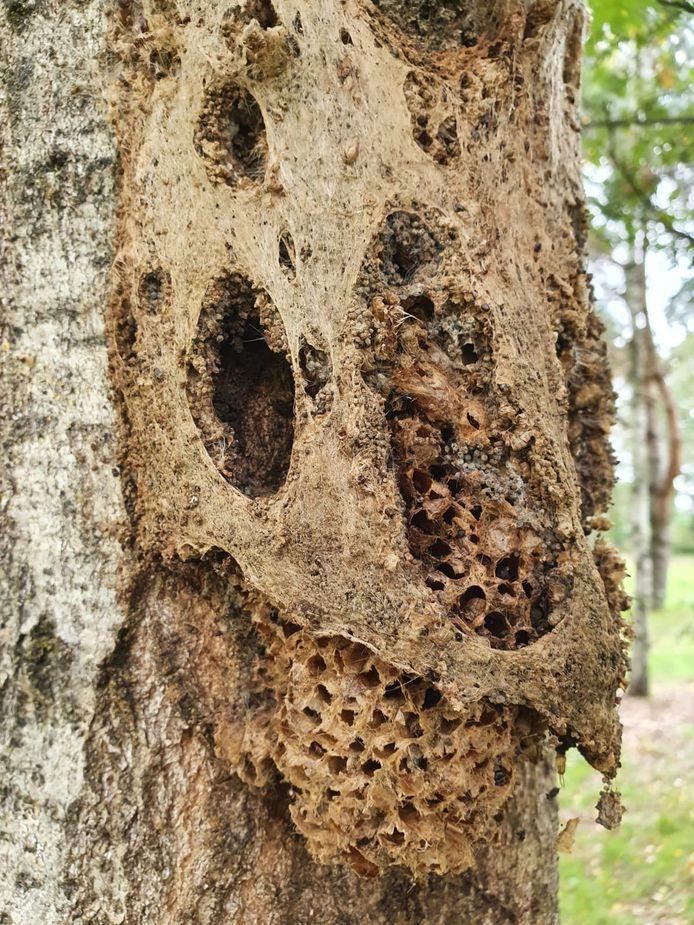 Het gefixeerde nest werd gedurende het seizoen gefotografeerd. Uiteindelijk bleken vogels en insecten massaal te genieten van het fixeermiddel.