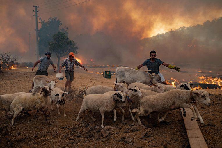 Duizenden brandweerlieden en vrijwilligers werden ingezet om het vuur te bestrijden, zoals hier in de Turkse plaats Mugla. Zeker acht mensen kwamen de afgelopen week om het leven, meer dan honderd raakten gewond. De branden lijken nu onder controle. Beeld AFP