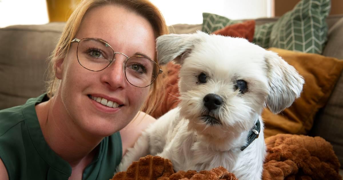 Kim (31) is op zoek naar wielrenner die haar blinde hondje Sem aanreed en liet liggen: 'Echt 'n laffe streek'