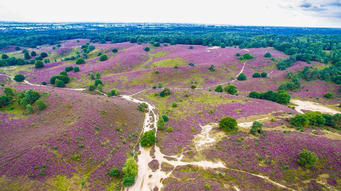 Natuurgebied de Posbank vanuit de lucht, waar Velp vlakbij ligt.