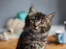 Het kittenseizoen is gestart: wat doe je nu als je een pasgeboren katje vindt?