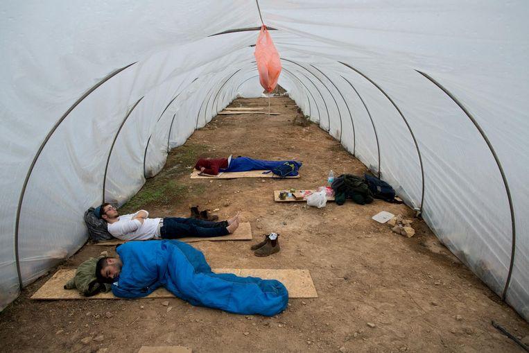 Joodse inwoners van Amona doen een middagdutje in een kas. Beeld ap