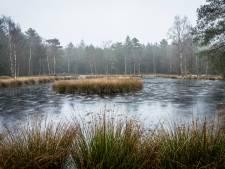 Zorgen in Heerde over bomenkap bij Pluizenmeertje: Gaat een idyllisch plekje verloren?