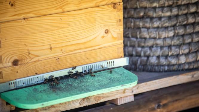 Van honing slingeren tot wijn proeven: vijf tips voor een leuk weekend in Limburg
