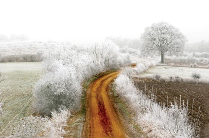 De Maasheggen in de winter.