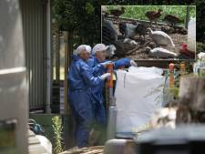 Vogelgriep in Heeten: 665 sierwatervogels vergast, minister stelt vervoersverbod in, eigenaar schrikt