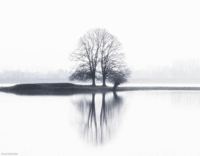 Vanaf de dijk bij Echteld met zicht op de tweelingbomen plus een bonus wilg