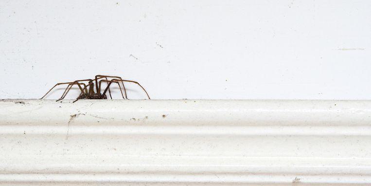 bang-voor-spinnen-spinnenfobie-margriet.jpg