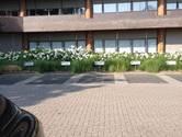 Op het gemeentehuis van Rheden is de vakantie nog niet voorbij