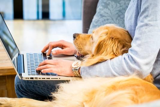 Vooral alleenstaanden varen wel bij het gezelschap van een hond.