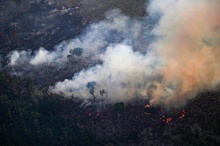 Brandende palmbomen bij de stad Porto Velho. Beeld REUTERS