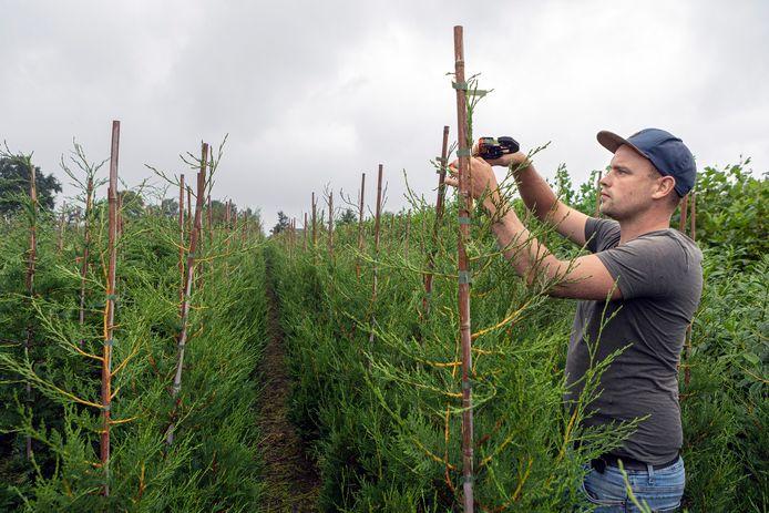 Achtmaal - 11-09-2021 - Pix4Profs / Johan Wouters - Voor de rubriek Van West Brabantse Bodem JS Tuinplanten uit Achtmaal. Eigenaar Jannick Schrauwen in actie.
