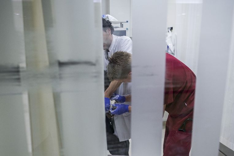 Verpleger Folkert en arts Gorzeman proberen de gebroken pols van de rastaman te gipsen. Beeld Rink Hof