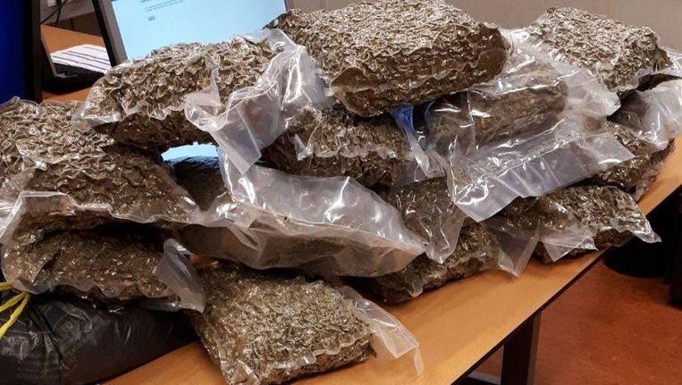 De politie trof 1400 plantjes en 17 kilogram henneptoppen aan. Beeld Politie Amsterdam Nieuw-West Zuid