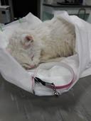 Kat 'Fleurtje', zoals ze dinsdagavond binnenkwam bij de Dierenambulance in Almelo, na te zijn gered uit het water door Fleur (18). Het kleine katje is een dag later alsnog overleden.