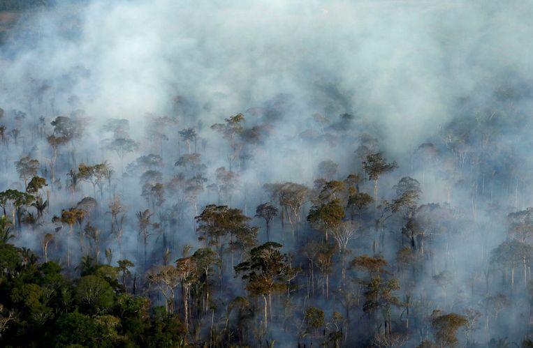 Grote ecosystemen, zelfs ter grootte van het Amazonewoud, kunnen binnen een tiental jaar plotsklaps ineenstorten.