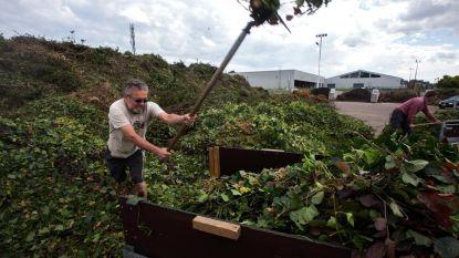 Inwoners Kaprijke en Sint-Laureins mogen om beurten naar milieupark met groenafval
