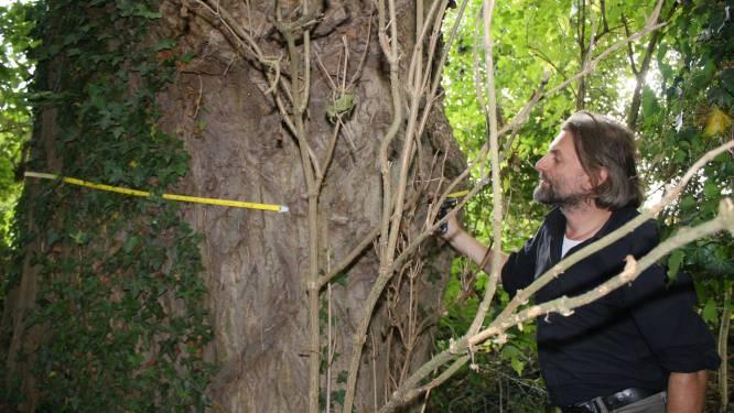 Natuurpunt zoekt merkwaardige bomen met een verhaal