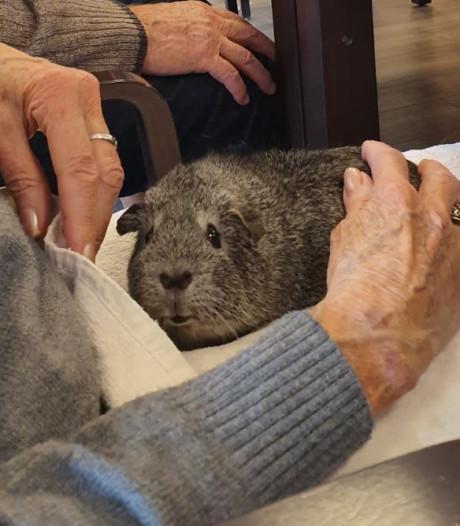'Alstublieft mevrouw, een cavia...' Gorcumse dieren uit Natuurcentrum vaker op bezoek in zorginstellingen