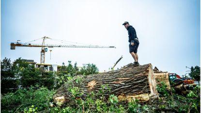 Tientallen bomen wijken voor residentie