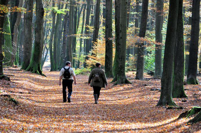 Wandelaars in het Speulderbos