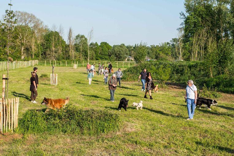 De nieuwe hondenlosloopweide Ter Heide is zo'n 70 are groot.