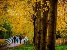 Nog even genieten van al die mooie herfstkleuren
