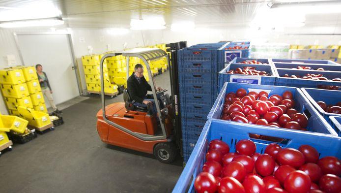 Vanwege de Russische boycot koopt de overheid veel Nederlandse tomaten op die vervolgens naar de voedselbank gaan zoals hier in Arnhem.
