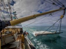 Frans zeebiggetje is een ware plaag voor Nederlandse vissers