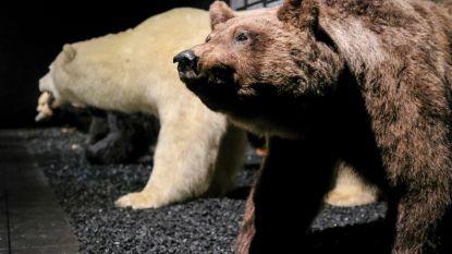 FOTOREEKS: Teddy & Beer: een tentoonstelling in het Koninklijk instituut voor Natuurwetenschappen die kinderen met hun beer bezoeken