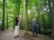 Massale bomenkap nodig om populair Oldenzaals wandelgebied gezond te maken