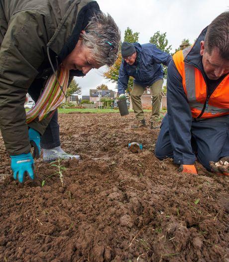 Bollen en struiken voor meer vlinders in Vlinderbuurt: 'We streven naar een 'honey highway' in de wijk'