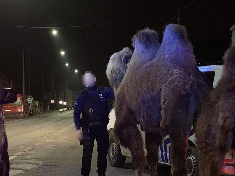 De dieren werden midden in de nacht gespot door de politie van Doornik. Beeld Facebook