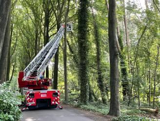 Bomen dreigen op straat te vallen in Varendreef